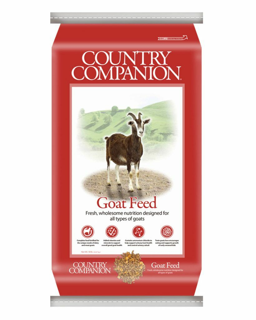 Country_Companion_Goat.jpg